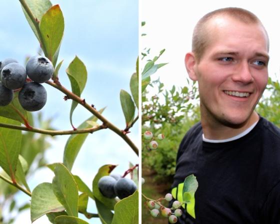 blueberry 5